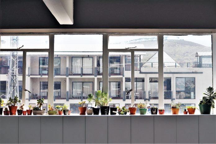 velke-okna-ziadne-sukromie-kvety-v-kvetinaci-byty-bytove-domy-chyby-pri-developerskych-projektoch