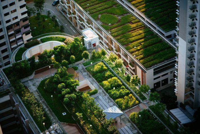 zelen-na-streche-budovy-ekodom-stromy-na-streche-trava-zelena-strecha