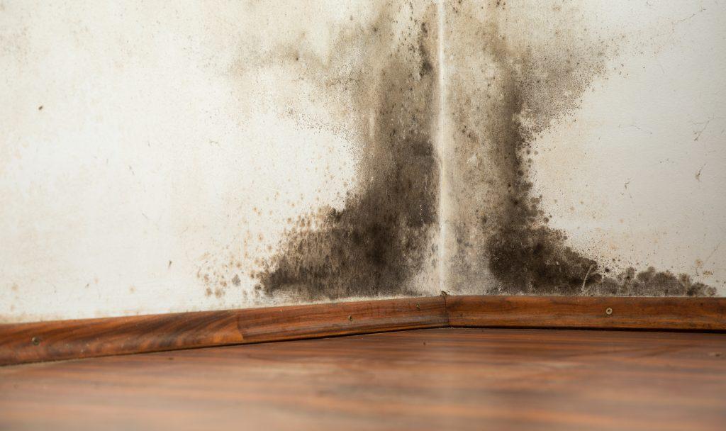 podlaha-stena-plesen-vlhkost-dom-miestnost-drevena-podlaha-listy